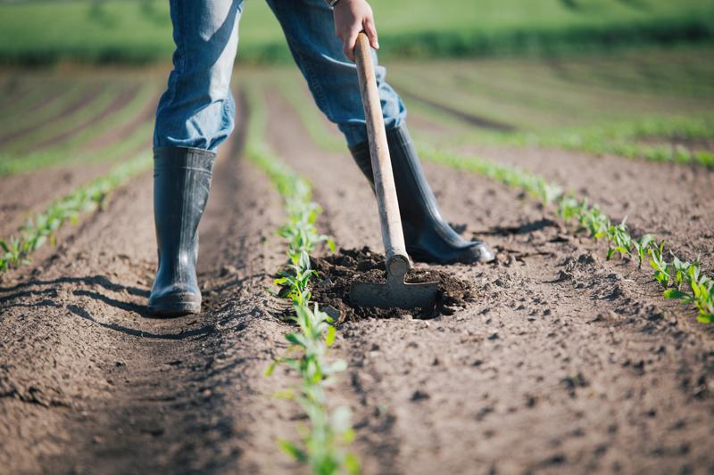 imprenditoria femminile nelle aziende agricole